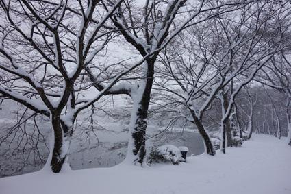 tree0085.jpg